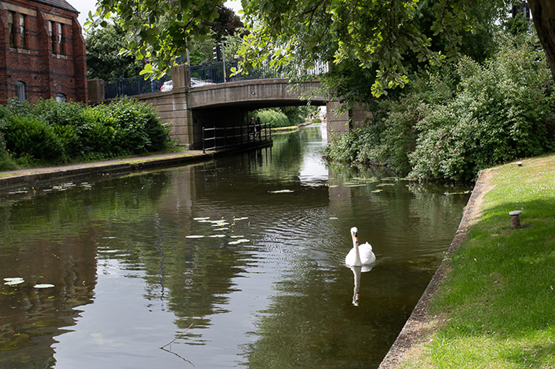 A view of Erewash Canal showing a swan and the bridge in Sandiacre Village Centre